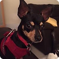 Adopt A Pet :: Gilda - Davie, FL