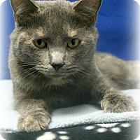 Adopt A Pet :: Cat Nip Everdeen - Melbourne, KY