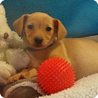 Adopt A Pet :: Skittles - Vacaville, CA