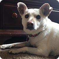 Adopt A Pet :: Rosie - Fort Collins, CO