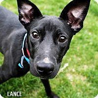 Adopt A Pet :: Lance - Appleton, WI