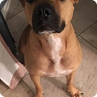 Adopt A Pet :: Diesel* - Miami, FL