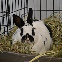 Adopt A Pet :: Zsa Zsa - Erie, PA