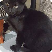 Adopt A Pet :: CoCo - Port Huron, MI