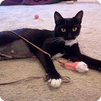 Adopt A Pet :: Jiggles McSkittles - Phoenix, AZ