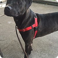 Adopt A Pet :: Ryder *Right-Hand Man* - Kittery, ME