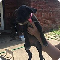 Adopt A Pet :: Dolly - Aurora, CO