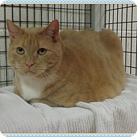 Adopt A Pet :: EVANGELINE - Marietta, GA