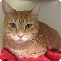 Adopt A Pet :: Somerset - Salisbury, MA