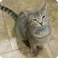 Adopt A Pet :: Hamish - Glendale, AZ
