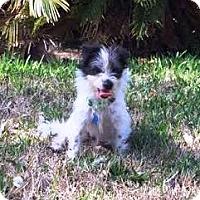 Adopt A Pet :: Nexie - Houston, TX