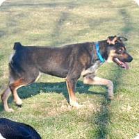 Adopt A Pet :: Rascal - New Kensington, PA