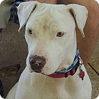 Adopt A Pet :: Nena - Houston, TX