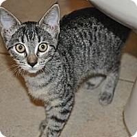 Adopt A Pet :: Nala (Spayed) *VIDEO** - New Smyrna Beach, FL