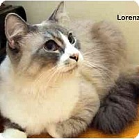 Adopt A Pet :: Lorenzo - Portland, OR