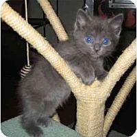 Adopt A Pet :: Porthos - Reston, VA