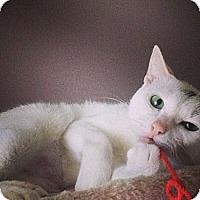 Adopt A Pet :: Tabby - Sunrise, FL