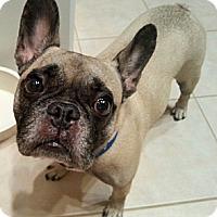 Adopt A Pet :: Tie - Orlando, FL