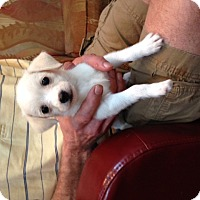 Adopt A Pet :: Ethel - Marietta, GA