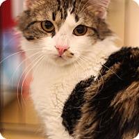 Adopt A Pet :: Valentine - Sacramento, CA