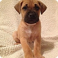 Adopt A Pet :: Ruby's Pup 1 - Long Beach, CA