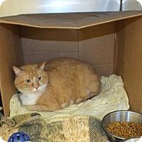 Adopt A Pet :: Poppy - Monroe, LA