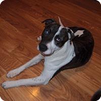 Adopt A Pet :: Jackson - Wilmington, MA
