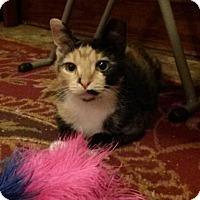 Adopt A Pet :: Pee Wee - Southington, CT