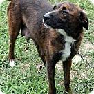 Adopt A Pet :: Madison