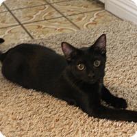 Adopt A Pet :: Ziggy & Bear - Orange, CA