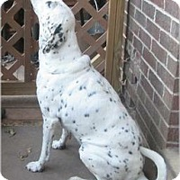 Adopt A Pet :: Pepper #2 - Adelphi, MD