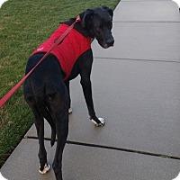 Adopt A Pet :: Zous - Hanover, PA
