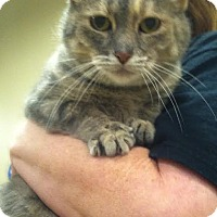 Adopt A Pet :: Miracle's Mom - Livonia, MI