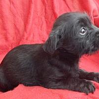 Adopt A Pet :: ALLEN - richmond, VA