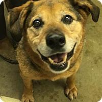 Adopt A Pet :: PENELOPE - Cadiz, OH