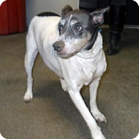 Terrier (Unknown Type, Medium) Mix Dog for adoption in Terre Haute, Indiana - SADIE