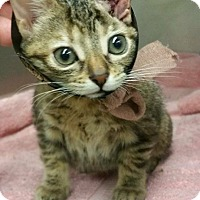 Adopt A Pet :: Taylor - Chicago, IL