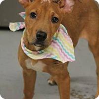Adopt A Pet :: Alex - Lebanon, CT