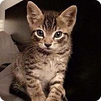 Adopt A Pet :: Jay - Gainesville, FL