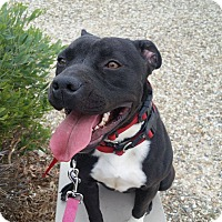Adopt A Pet :: Arissa - Las Vegas, NV