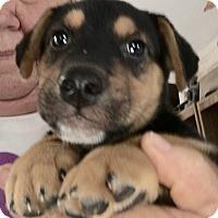 Adopt A Pet :: Grover - Tucson, AZ
