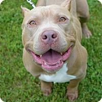 Adopt A Pet :: Walter - Elizabethtown, PA