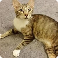 Adopt A Pet :: Esmerelda - Fort Collins, CO