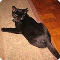 Adopt A Pet :: Darius - Colmar, PA