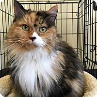 Adopt A Pet :: Gabriella - Alpharetta, GA