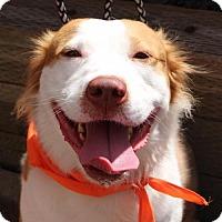 Adopt A Pet :: Aarli - Littleton, CO