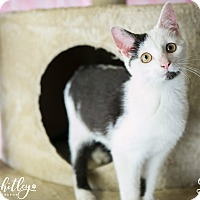 Adopt A Pet :: Dory - Columbia, TN