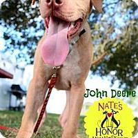 Adopt A Pet :: John Deere - Bradenton, FL