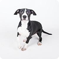 Adopt A Pet :: Brady - adopted - Decatur, GA