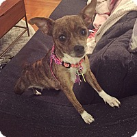 Adopt A Pet :: Jenny: Adoption Pending - Verona, NJ